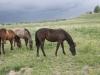 horses-2012-187