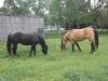 horses-may-2012-057