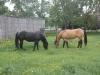 horses-may-2012-058